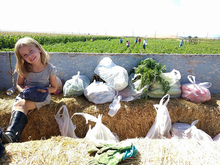vegetable-picking-2016
